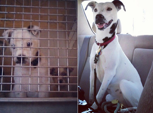 15 Animals Who Are Taken From Shelter And Their Before / After Photos