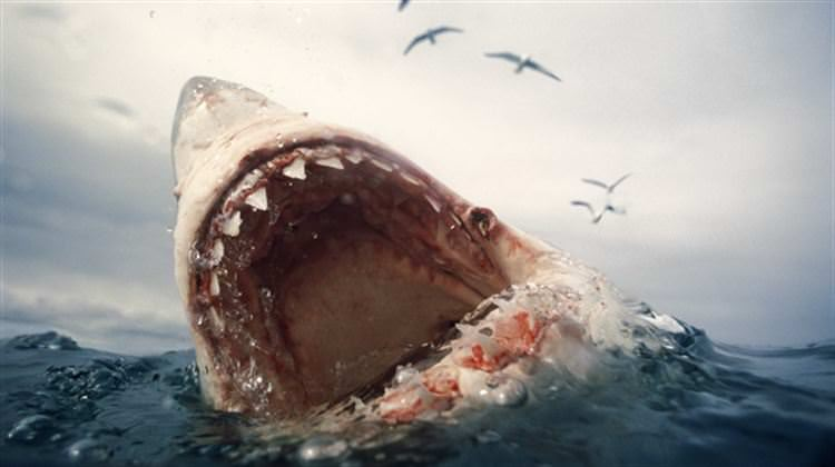 5 Real Shark Attacks On Humans