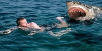 5 Real Shark Attacks On Humans Caught